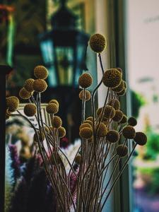 ドライフラワーDry Flower