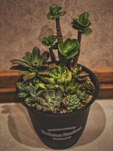 多肉植物 Plants