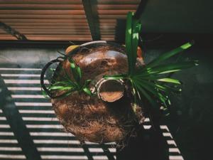Plants20201112