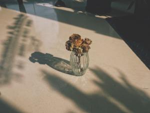 dryflower20201109