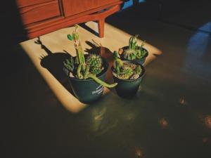 plants20201202