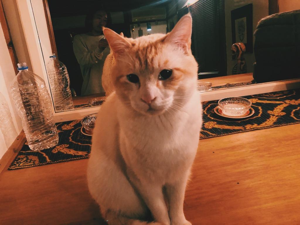 cat20201218