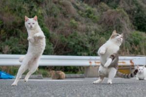 cat-blog-20201218