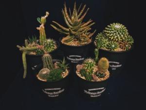 plants20210113
